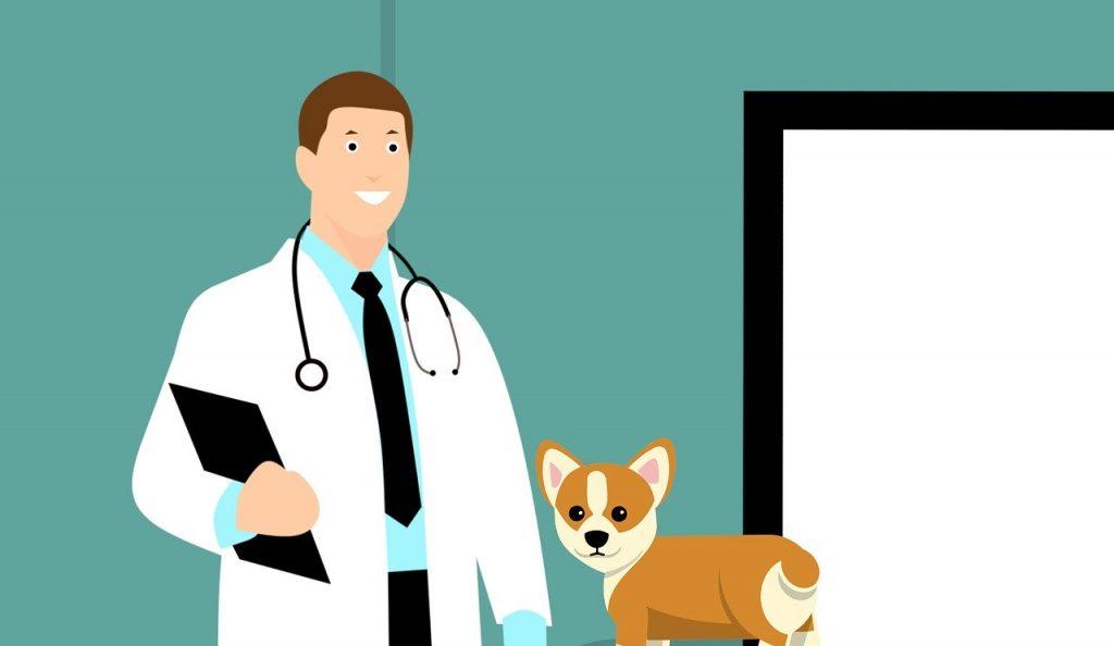 רופא כלבים מקצועי