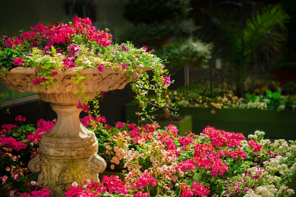 פרחים במגוון צבעים