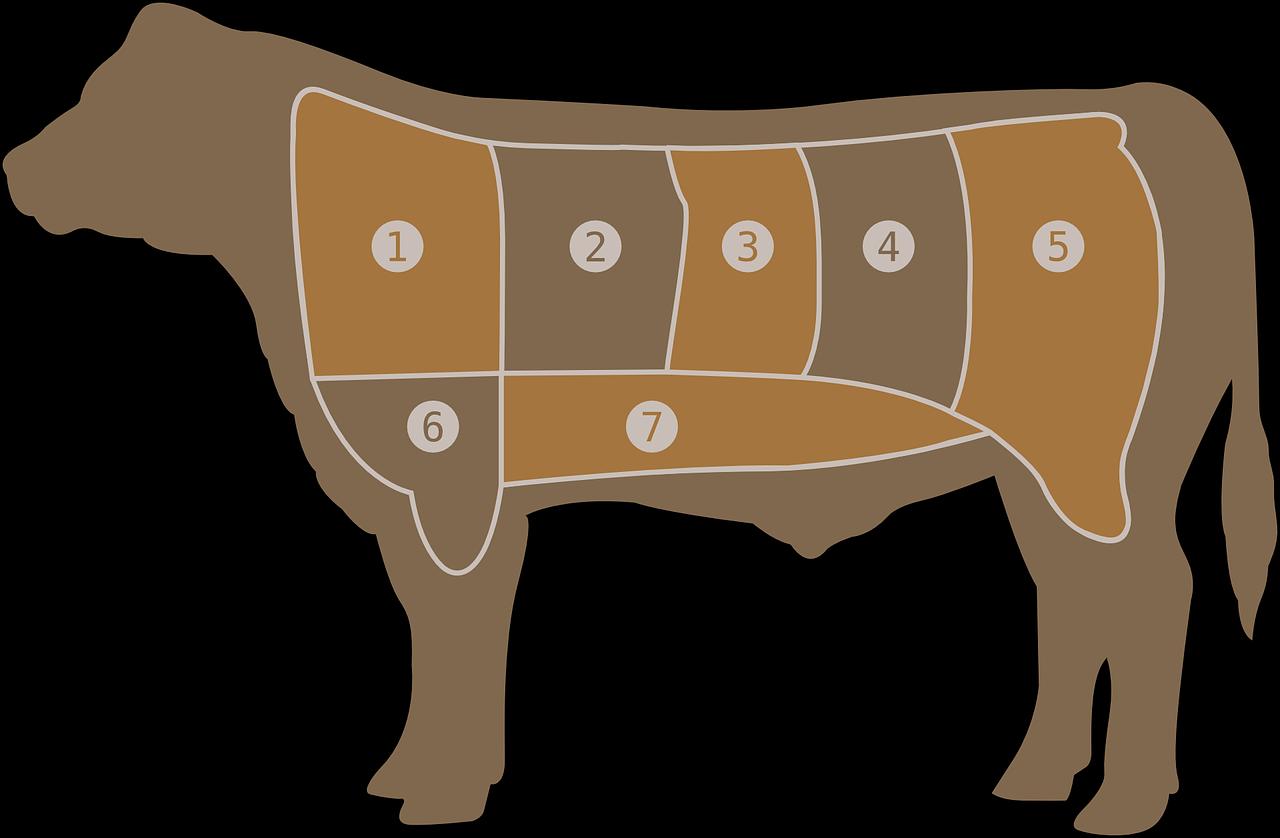 פרה מחולקת לחלקים